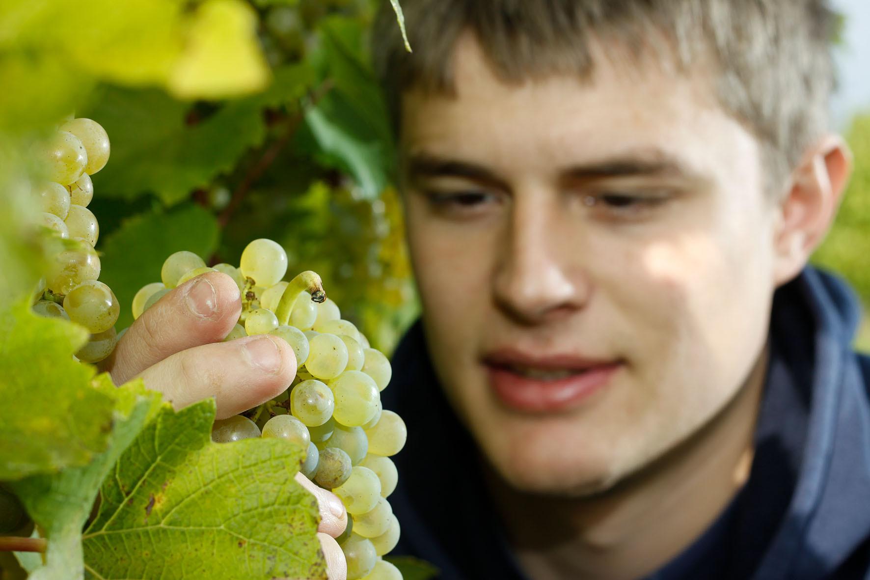 Stefan Hütter im Weingarten in St. Anna